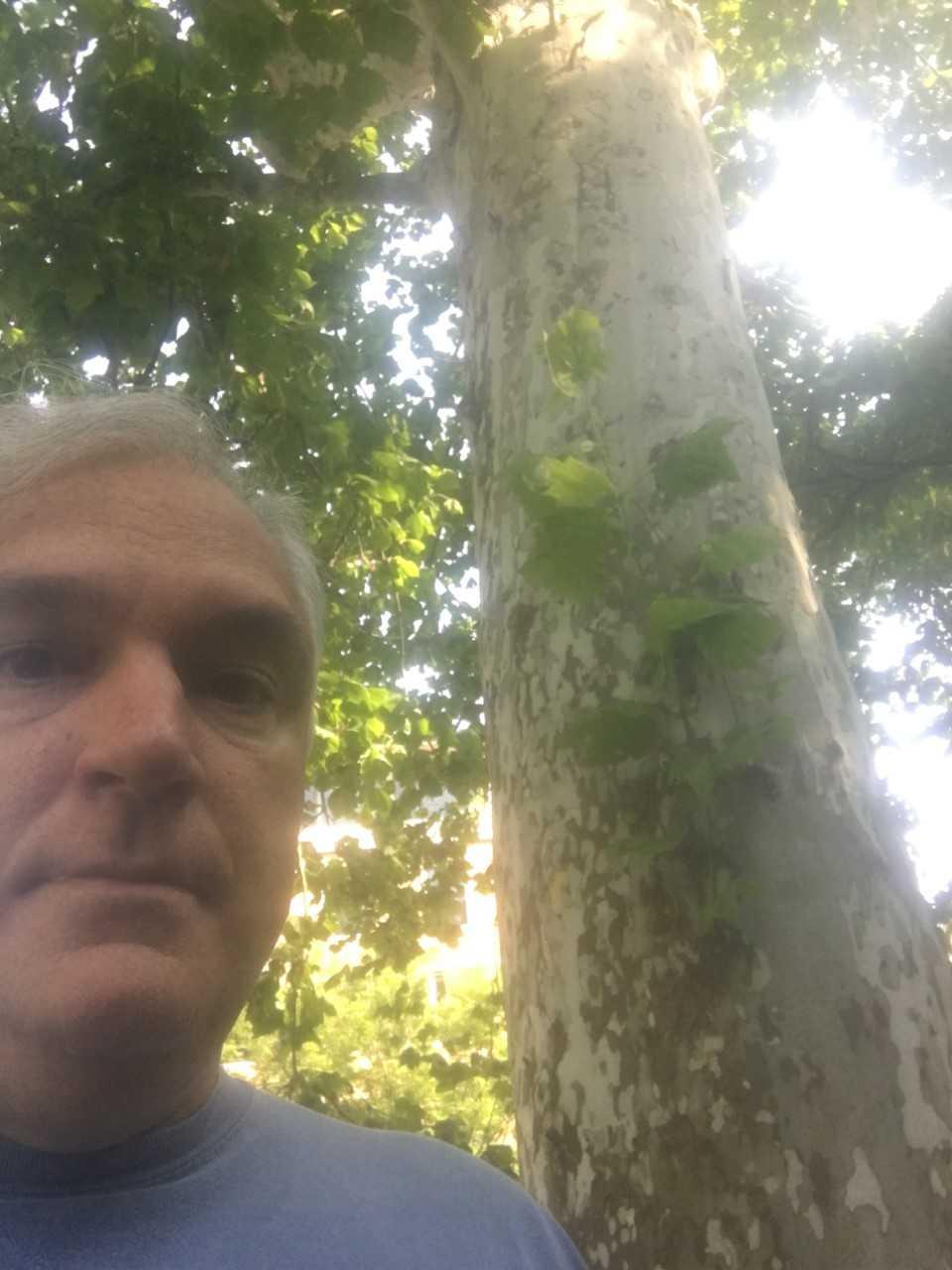 Tree at princeton